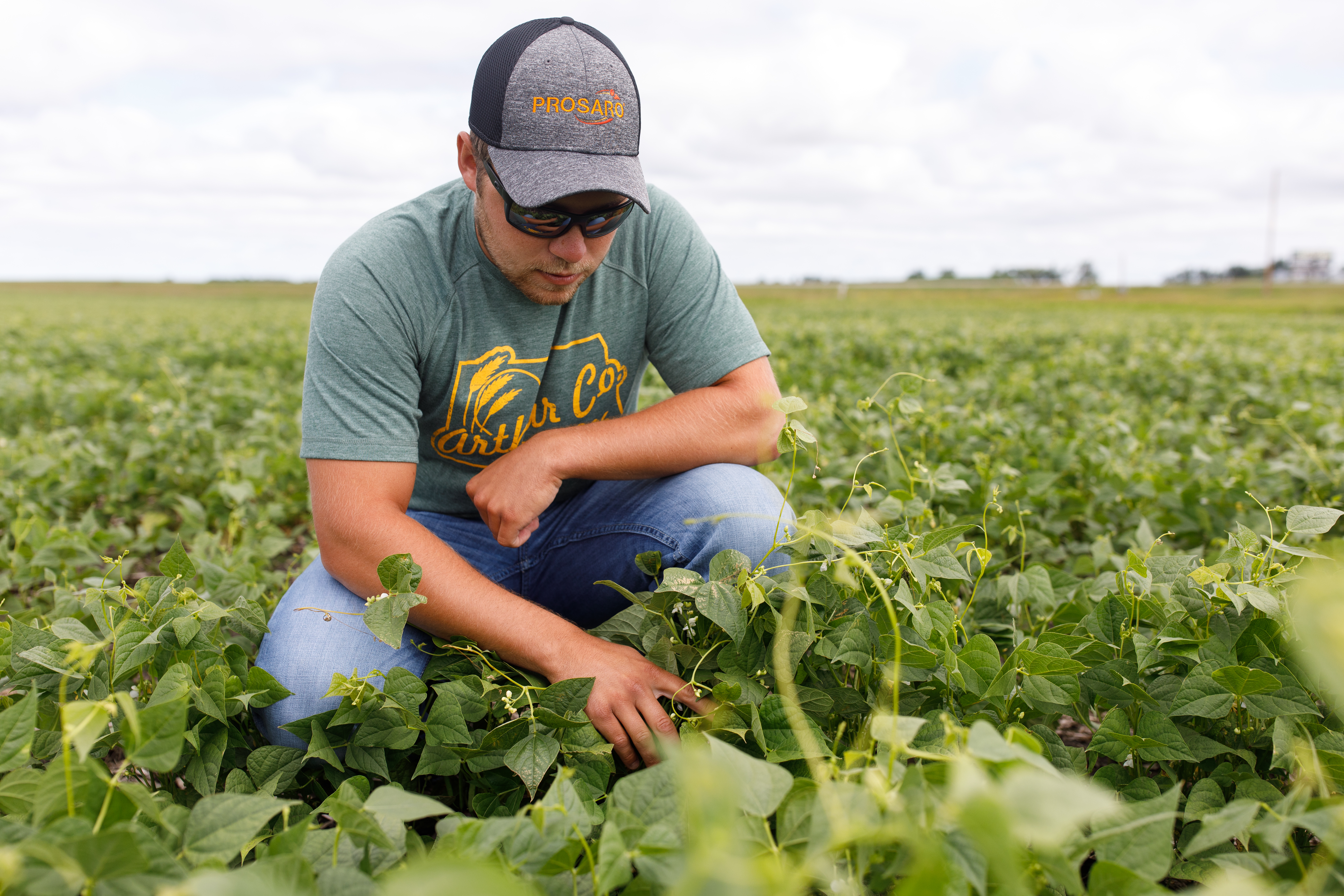agronomist scouting soybean crop
