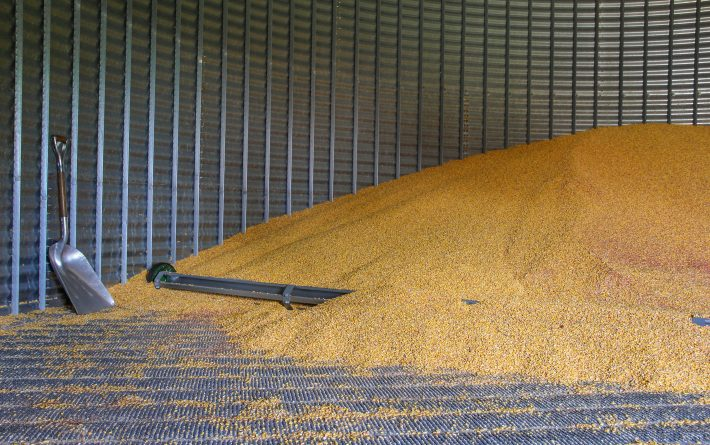 A pile of corn inside of a grain bin.