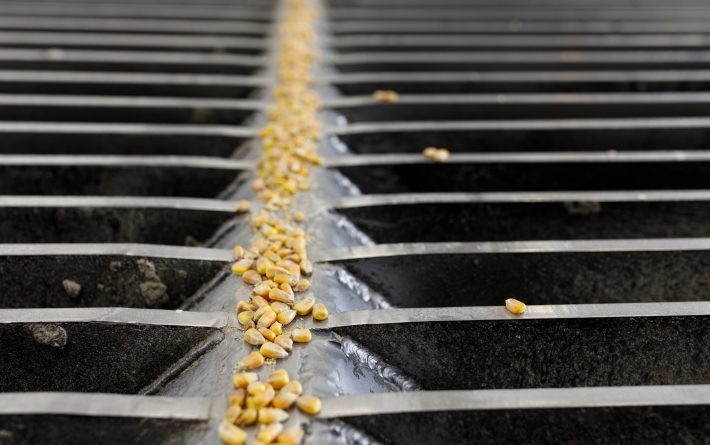 Corn Morsel on Grated Floor