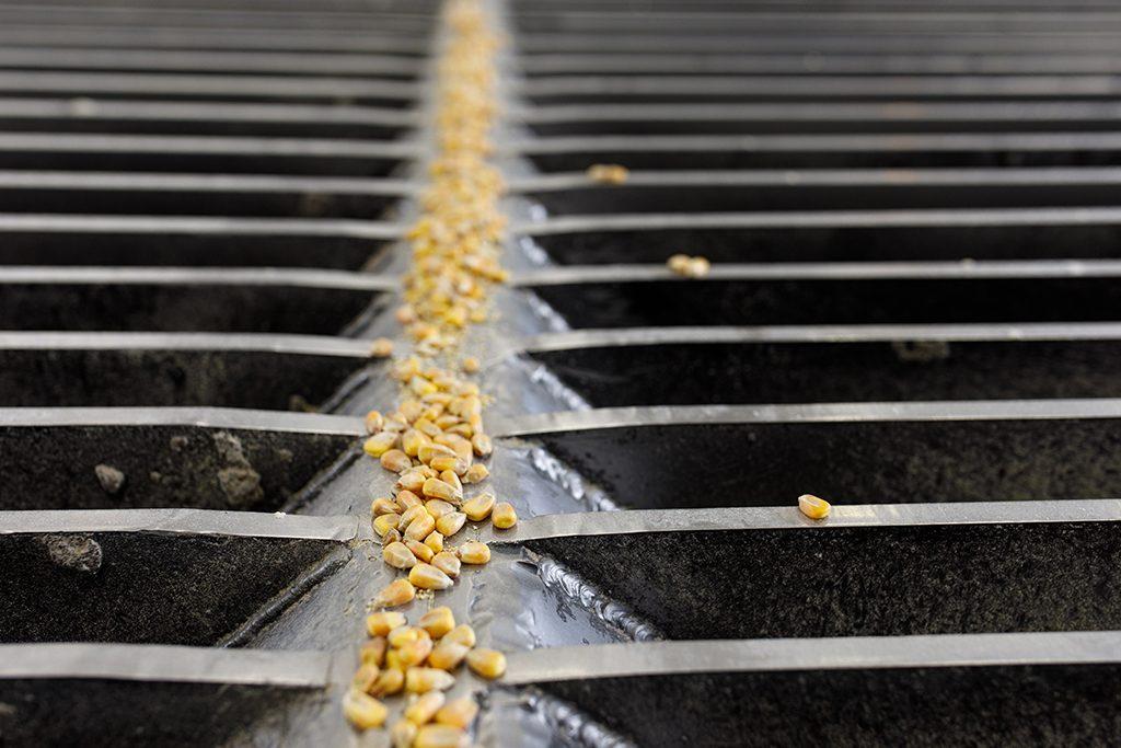 Corn on Grates