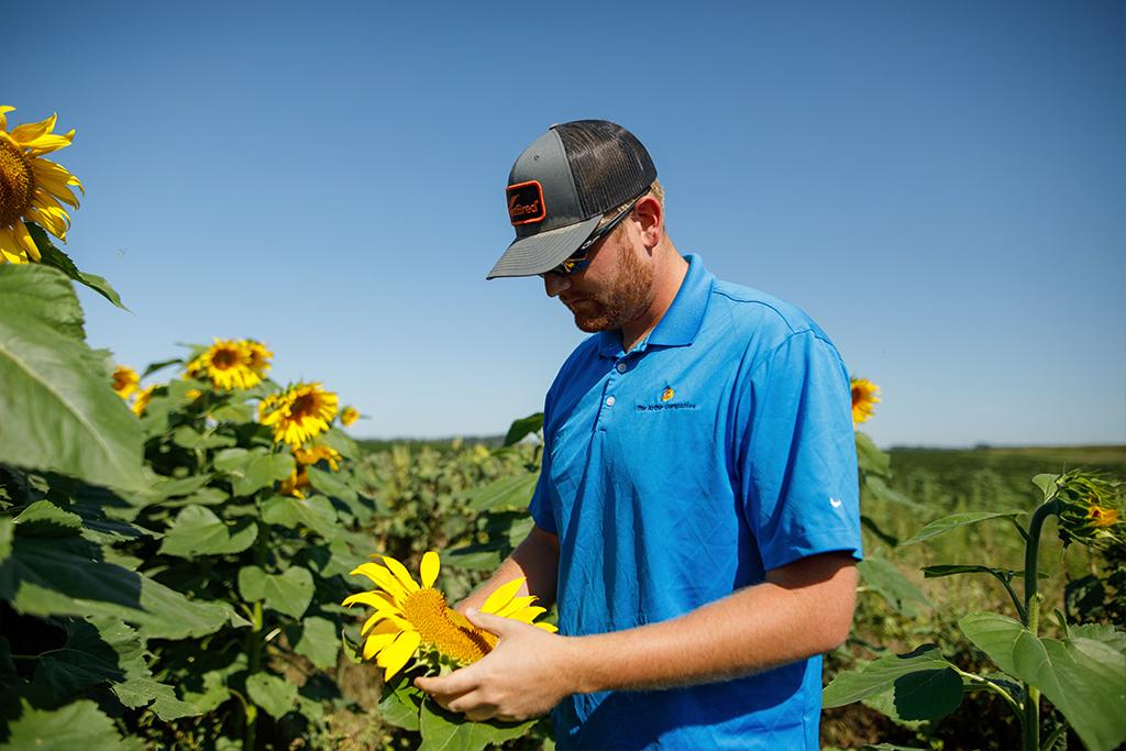 Agronomist Inspecting Sunflower Plant