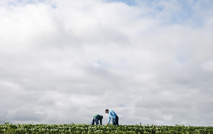 Two Arthur Companies Team Members In Bean Field